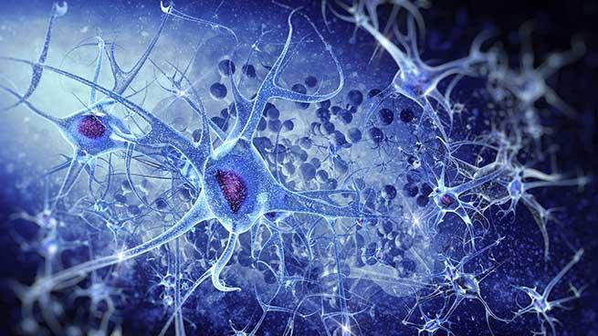 Tests in vitro et ex vivo: neurobiologie