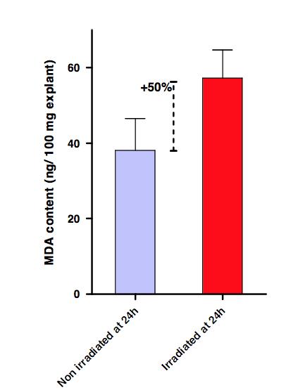 Synelvia_Evaluation of lipid peroxidation after UV irradiation