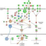 mw_NF-kB-signaling-pathway-affymetrix
