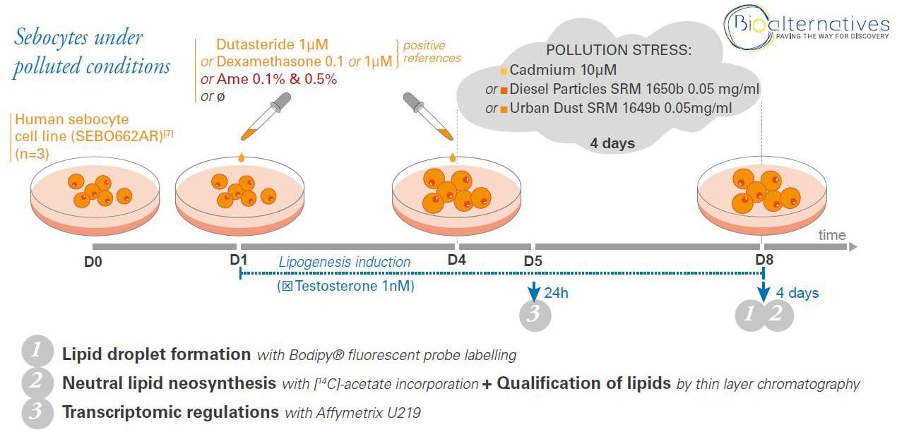 lipid production