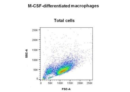 Total cells M1-M2 macrophages viability