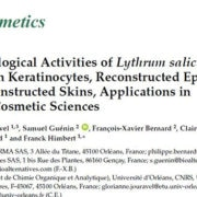 New Biological Activities of Lythrum salicaria L.