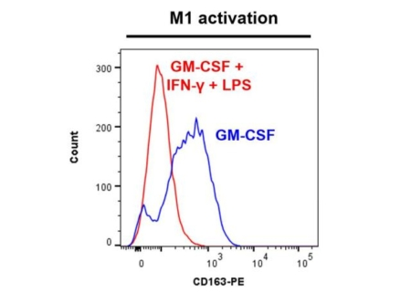 CD163 marker - M1 activation