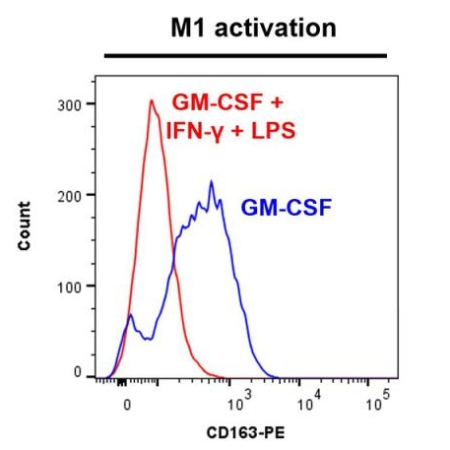CD163 marker - M1 activation