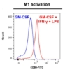 CD80 marker - M1 activation