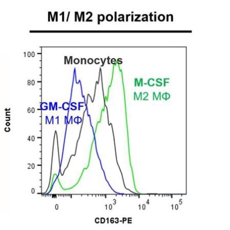 CD163 marker - M1-M2 polarization