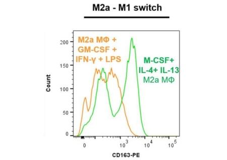 CD163 marker - M2a-M1 switch
