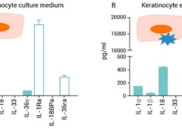 Quantification of the IL-1 family member proteins in keratinocyte culture medium (A) and in keratinocyte extract (B)