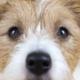 in vitro canine models