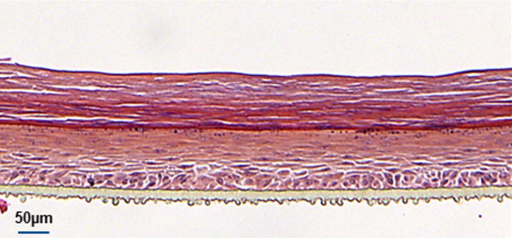 Modèle canin en défaut (RCE dermatite atopique)