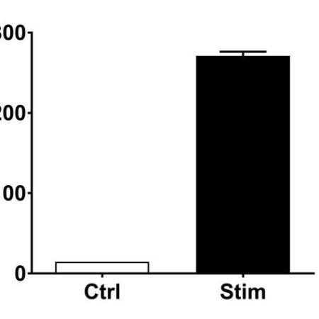 PBMC-0009_IL-13 release#Stim