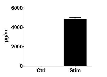 CD4TL-0001_IL-2 release#Stim