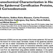 Dog Skin - Epidermal Cornification Proteins